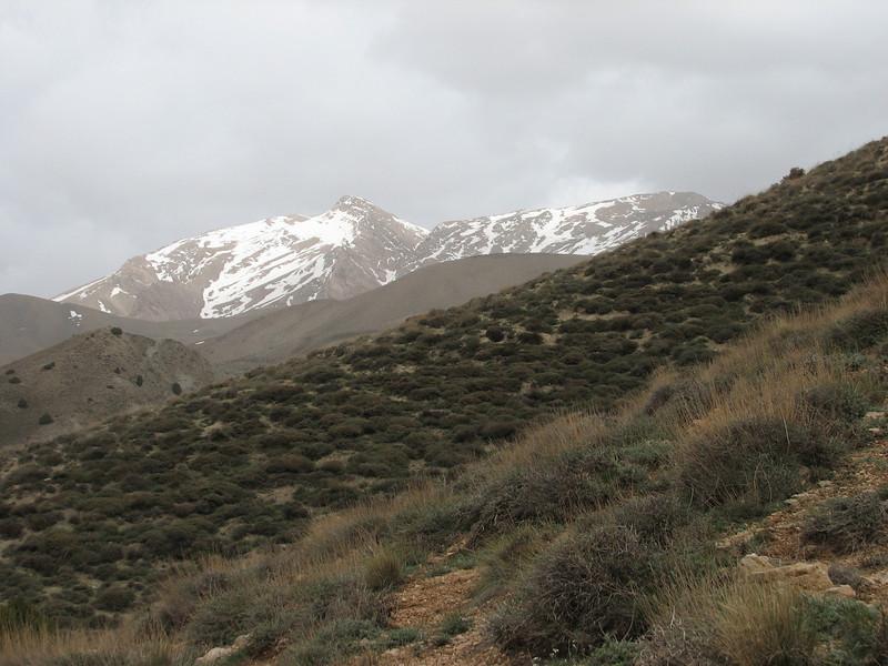 thorn-cushion landscape