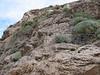 limestone rocks, habitat of Gypsophila aretioides