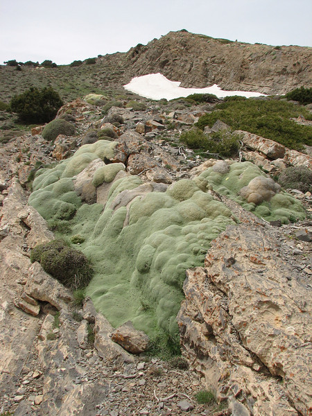 rocky outcrop with Gypsophila aretioides