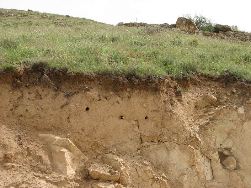 nests of bee eaters, Merops apiaster (Iran, Azarbayjan-e-Gharbi, 5km SW of Shahin Dezh 1700-1800m (29)