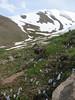 Puschkinia scilloides (Iran, Azarbayjan-e-Gharqi, Sahand mountains)(20)