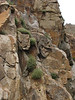 Galium spec. (Iran, Azarbayjan-e-Gharqi, mountains between Ahar and Meshgin Shahr (11)