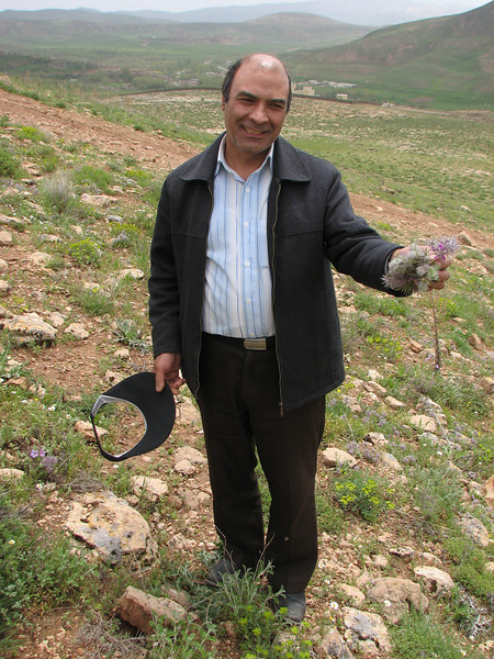 collecting plants of Stachys lavandulifolia for making tea (Iran, Azarbayjan-e-Gharbi, Takht-e-Soleyman 2235m (32)