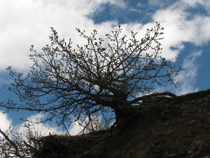 Quercus brantii near the border Iran-Azarbayjan