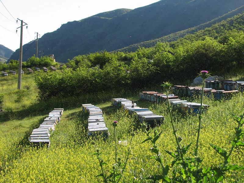 bee-keeping (Iran, Azarbayjan-e-Gharqi, mountains NE of Mardanqayem, border Iran-Armenia (16)