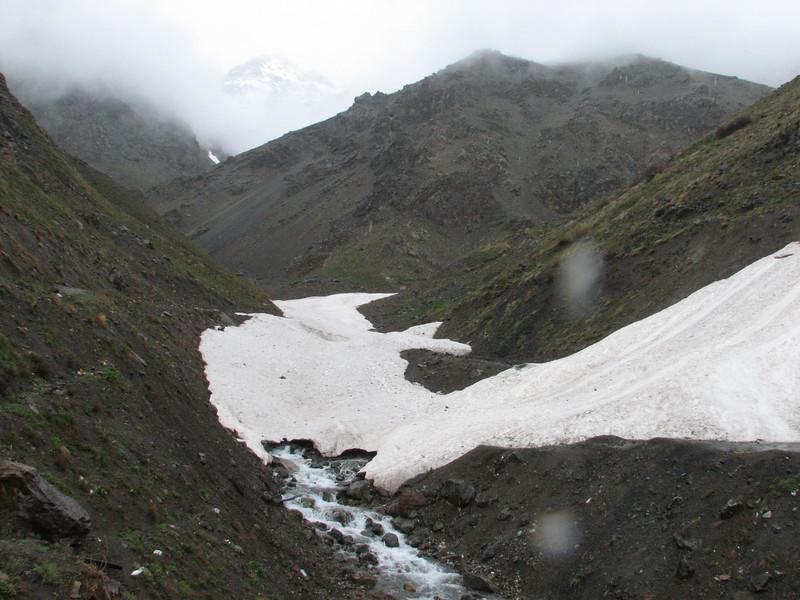 Ranunculus bulbilliferus (snowbeds)(Iran, Tehran, Elburz mountains, Dizin pass 3234m (2)