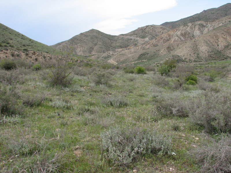 habitat orchids (Iran, Azarbayjan-e-Gharqi, mountains NW of Kharvanaq (19)