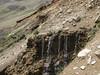 Primula auriculata (wet habitat) Iran, Gilan, Elburz mountains, pass, SE of Masuleh 2200m (6)