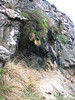 Adianthum capillus-veneris (Iran, Gilan, Elburz mountains, Fasham pass 2800m (3)