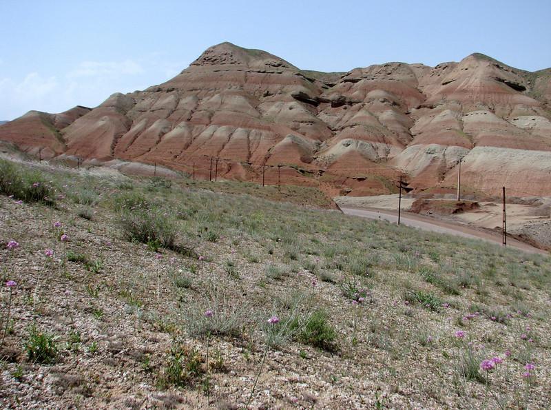 Habitat of Gymnarrhena micrantha and Allium cf. rubellum (Iran, Qazvin, Sendan mountains, near Gilavan, W of Sefid Rud Reservoir (40)