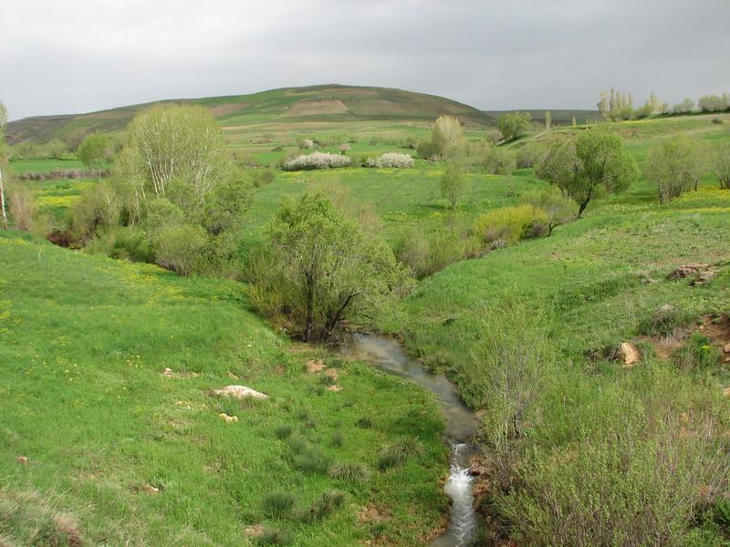 (Iran, Kurdistan, near Choplu 1700m (31)