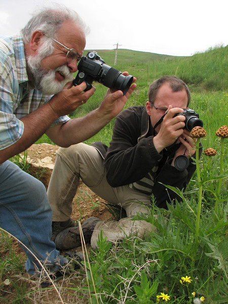 Harrie & Kees Jan takes pictures, Centaurea spec. (Iran, Azarbayjan-e-Gharbi, pass near Khalifen 2150m, near reservoir Mahabad (27)