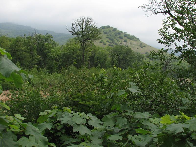 forest habitat GNP