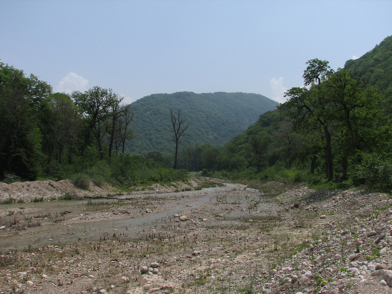 forest and river in Golestan National Park