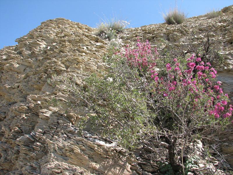 habitat of Convulvulus cantabrica and Salvia hydrangea
