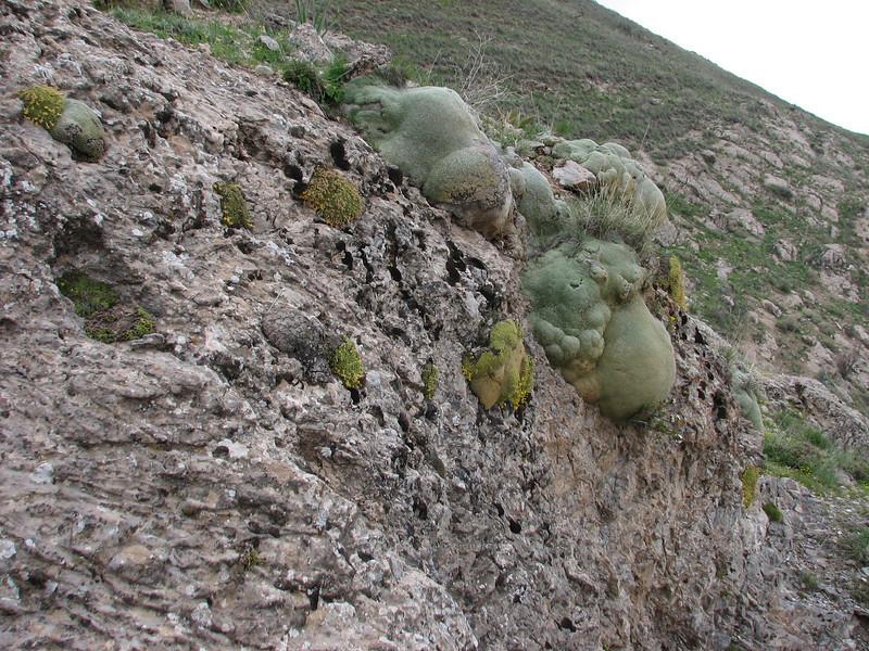 habitat of Dionysia tapetodes and Gypsophila aretioides