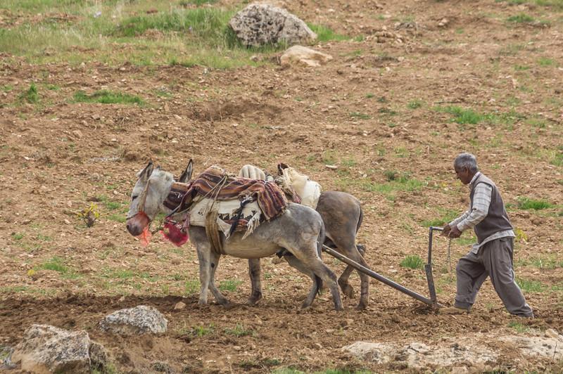 Farmer plows his land