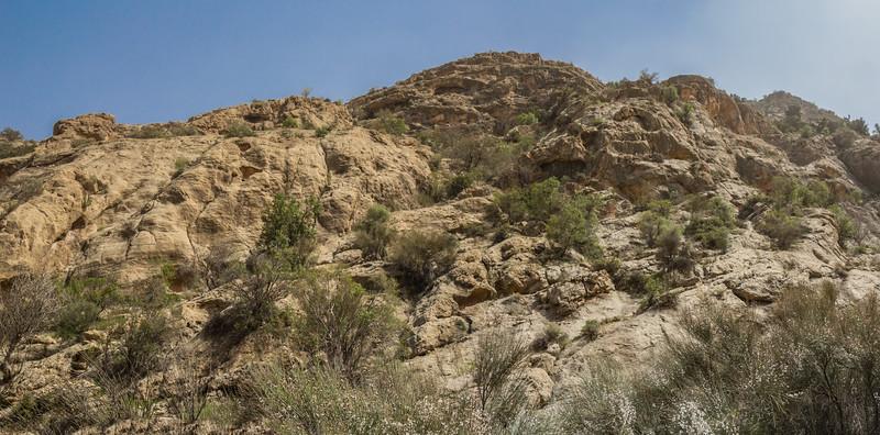 Habitat of Dionysia sarvestanica ssp. sarvestanica