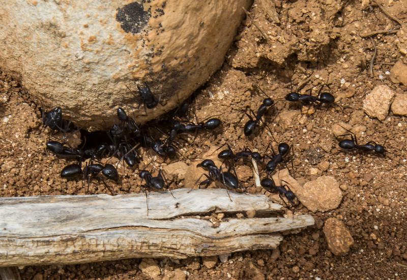 Ants ? 52