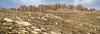 Kuh-e-Pashmaku, 3017m, habitat of Dionysia iranshahrii