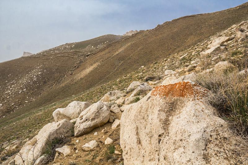 Ornithocoprolitisch habitat of Lichen