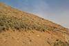Habitat of Dionysia bryoides