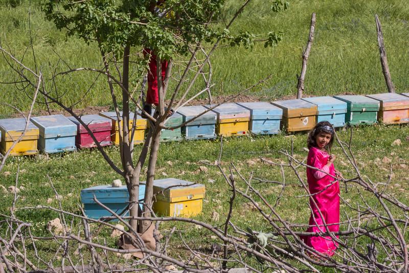 Bees keeping