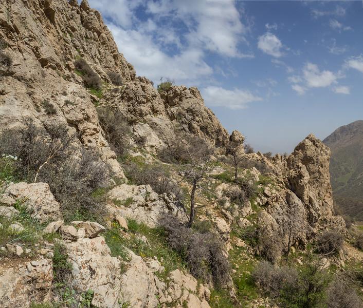 Habitat of Dionysia iranica