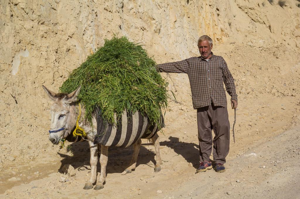 Pack donkey