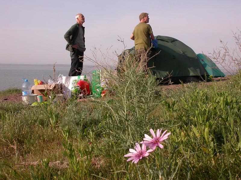 Campside and Tragopogon ruber