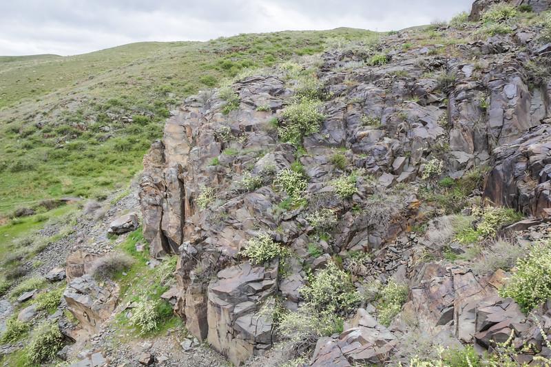 Rocks with petroglyphs