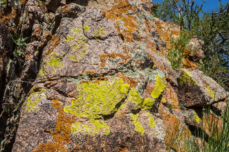 Lichen, yellow=Pleopsidium flavum, orange=Xanthoria elegans