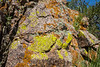 Lichen, yellow=Pleopsidium flavum, orange=Xanthoria elegans