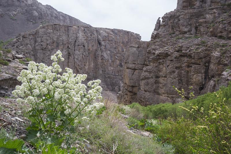 Passroad, Karatau mountains near Turkestan