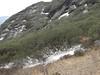 Rhodo forrest, Kothe 3700m-Zatwrala 3800m
