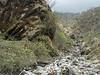 Piptanthus nepalensis, Zatwrala 3800m-Lukla 2800m