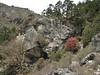 Rhododendron, Deboche 3650m-Namche Bazaar 3450m
