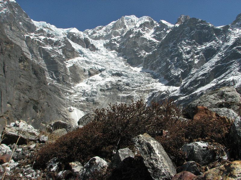 Shrubs, Tangnag 4300m-Khare 4950m