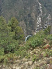 Pinus wallichiana, Monjo 2900m-Namche Bazaar-Tengboche-Deboche 3630m