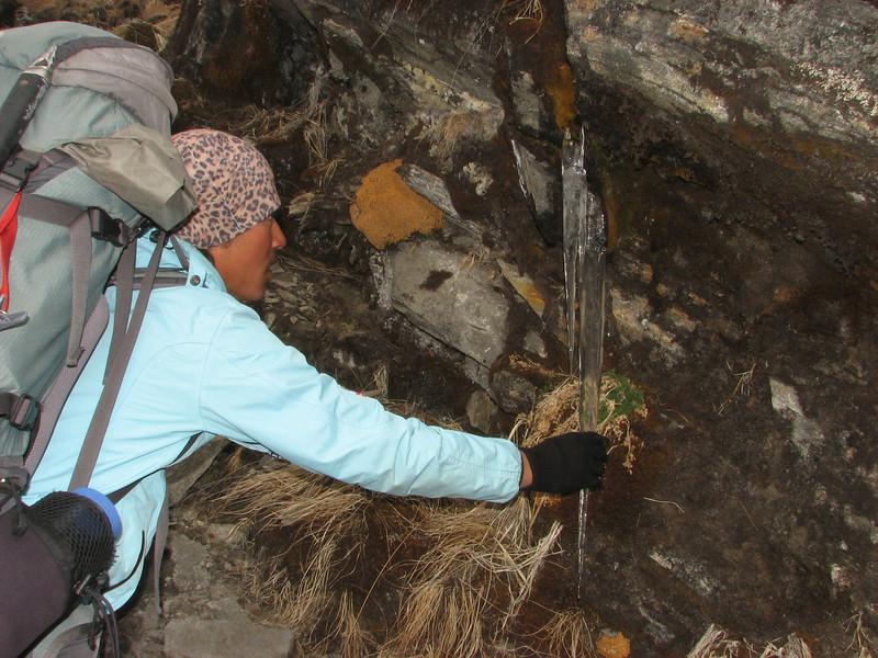 Mingmar picking an icicles, Kothe 3700m-Zatwrala 3800m