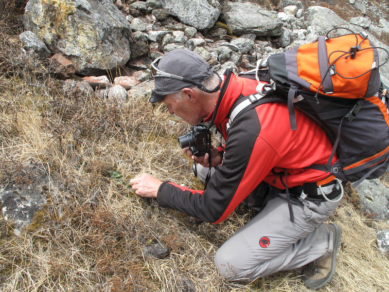 Photographing plants, Khare 4950m-Kothe 3700m