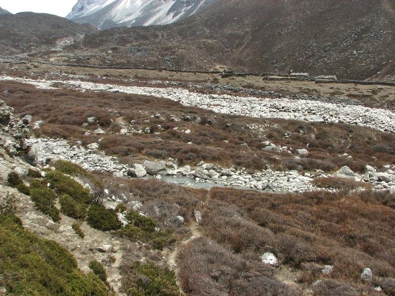 Lonicera rupicola, Base camp Island Peak 5000m-Deboche 3650m