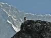 Prunella himalayana, Chhukung 4780m-Island Peak base camp 5000m