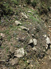 Gentiana pedicellata, Lukla 2800m-Monjo 2900m