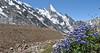 Delphinium cashmerianum and Layla Peak 6200m
