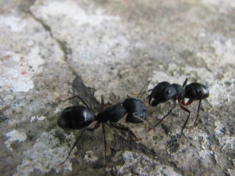 Ants, Islamabad, Pakistan