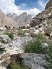 Indigofera heterantha zie1128(not Hedysarum falconeri), Paiju 3450m-Khobursai 3930m, Baltistan