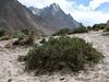in fruit near Paiju 3450m, Baltistan