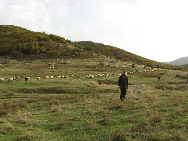 Sheperd with his sheeps and goats near Bitlis