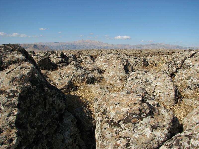 Lichen on vulcanic rocks,  Diyarbakir - Siverek - Karacadag
